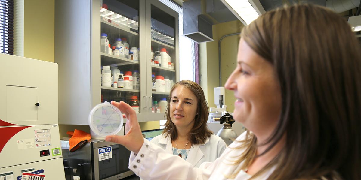 Fiona Davies and Nanette Boyle inspect bacteria dish.