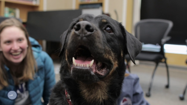 Therapy dog at the library