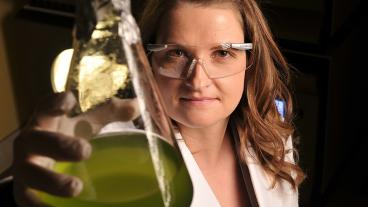 Assistant Professor Nanette Boyle looks at one type of photosynthetic organism used in her lab for metabolic engineering.