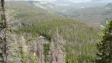 Pine beetle devastation in Colorado.